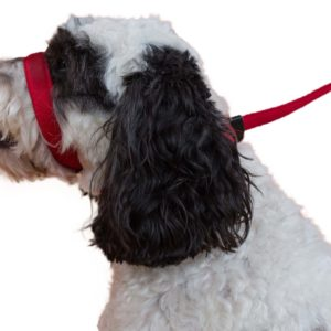 UniWalker Dog Lead – Red