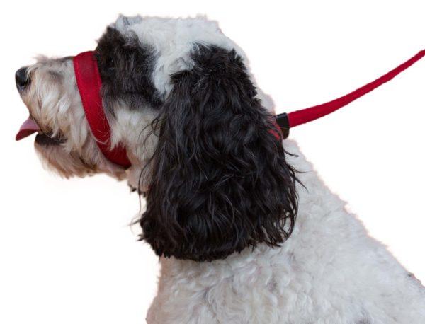 Uniwalker Figure of 8 training dog lead red