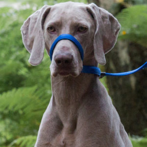 UniWalker Training Dog Lead – Blue