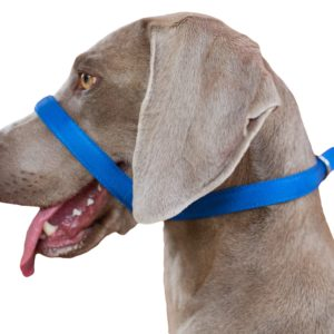 UniWalker Dog Lead – Blue
