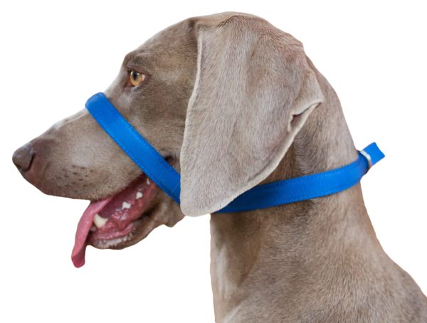 Uniwalker Figure of 8 training dog lead blue