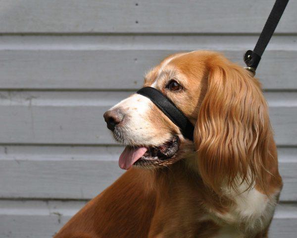 Uniwalker Figure of 8 training dog lead black
